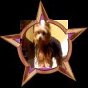 Badge-2280-2