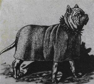 Dog Tomrad