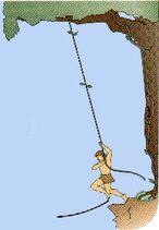 Tarzan swings