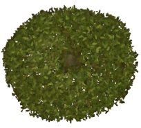 Oak Tree TP2