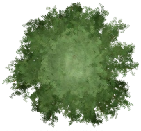 Redwood Tree TP2
