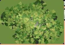 Birch Tree TP2