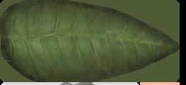 Leaf TP2