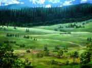 Bosque de los árboles gigantes