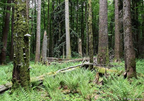 File:Forest5.jpg