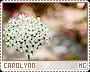 Carolynn-phenomena