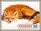 Pshaman-elements0