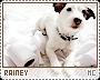Rainey-phenomena