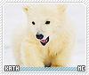 Kath-animalia