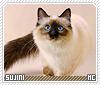 Sujini-animalia