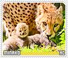 Minako-animalia
