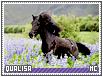 Qualisa-misc