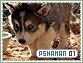 Pshaman-elements1