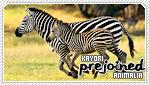 Kayori-animaliab