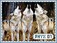 Phyx-elements1