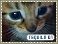 Tequila-elements1
