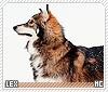 Lex-animalia