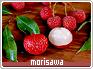 Morisawa-alacarte