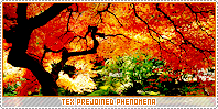 Tex-phenomena b