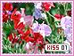 Kiss-elements1