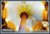 Nanhoi-aperture