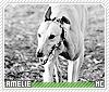 Amelie-animalia