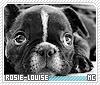 Rosielouise-animalia