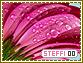 Steffi-elements0