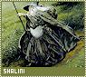 Shalini-novella