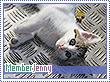 Jenny-natura