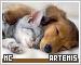 Artemis-etc