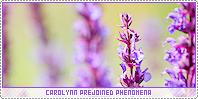 Carolynn-phenomena b