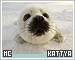Kattya-etc