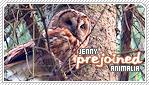 Jennyfer-animalia b