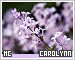 Carolynn-etc