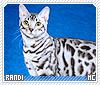 Randi-animalia