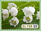 Elysa-elements2