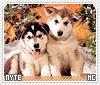Nyte-animalia
