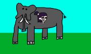 Ravioli elephant