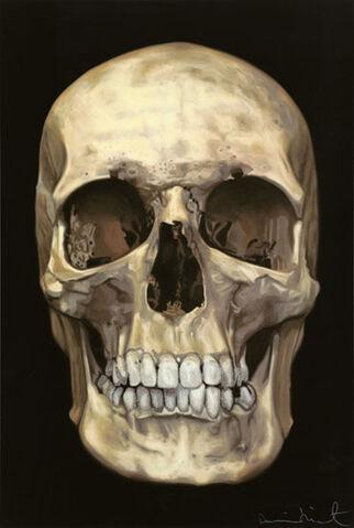 File:Skull-1-.jpg
