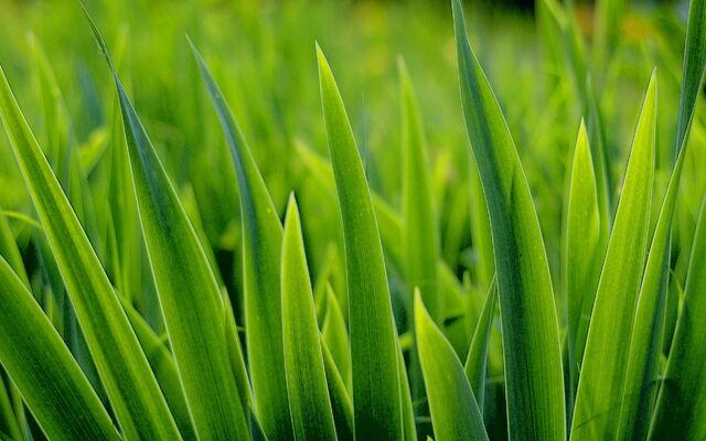 File:Grass back.jpg