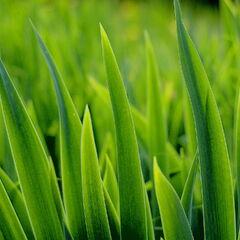 <b>Grass</b>