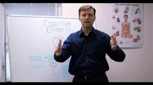 Effects of Stress on the Brain-1