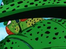 Cell begins absorbing