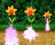 Dragon Flowers