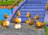 Argueing ducks