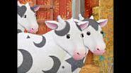 Cow ladies