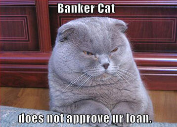 Banker-cat-does-not-approve-your-loan