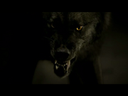 Tyler Lockwood werewolf form