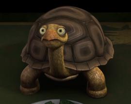 Rafs turtle eating